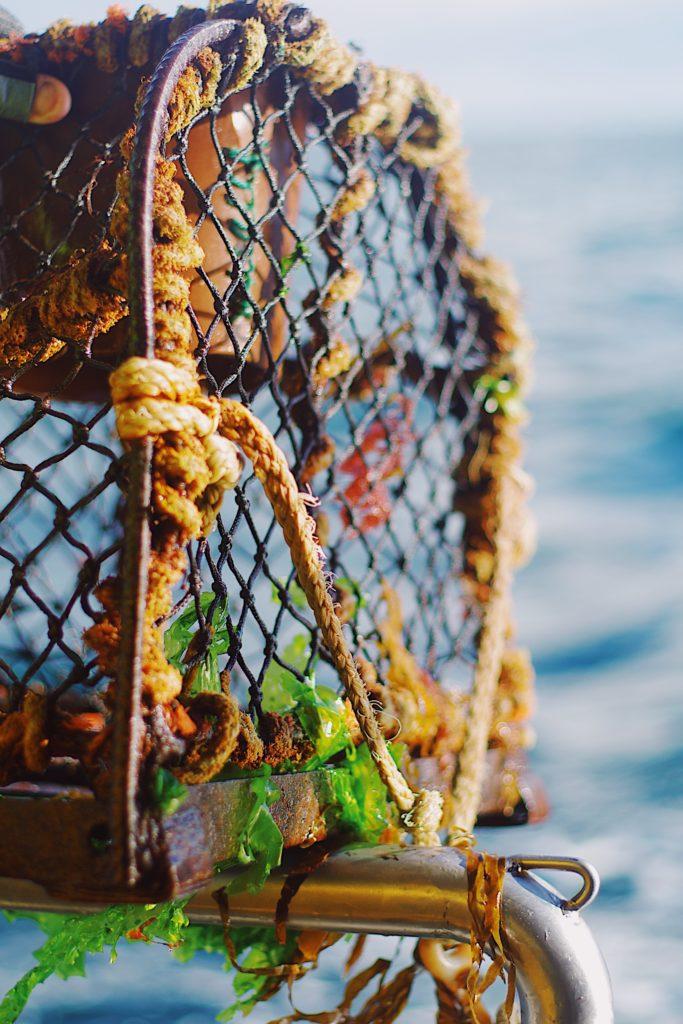 Découverte de la pêche aux casiers, pour pêcher des crabes et des araignées de mer