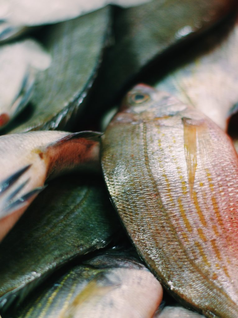 visite de la criée de noirmoutier où nous avons assisté à la vente de poissons