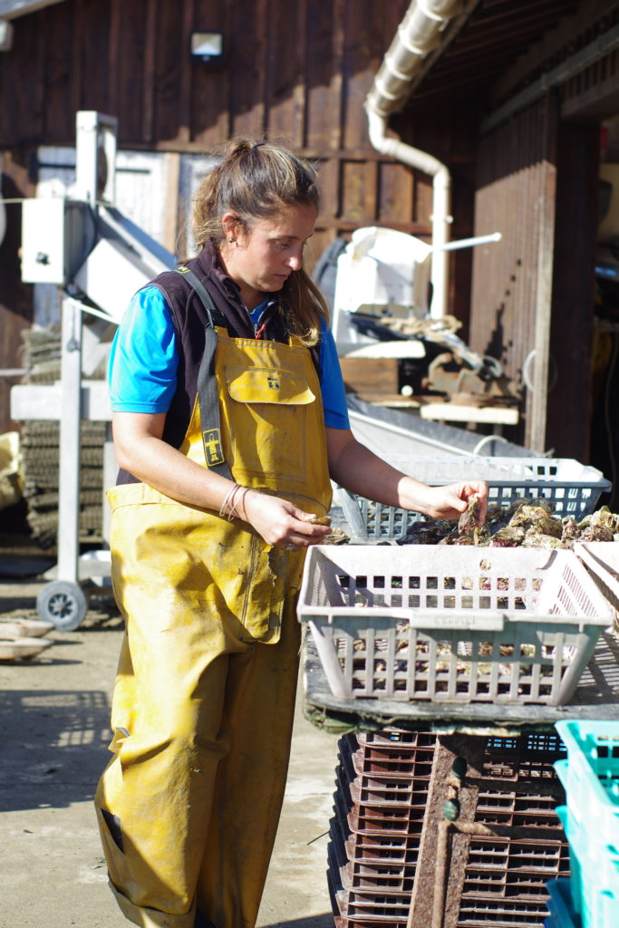 le calibrage des huitres cap ferret