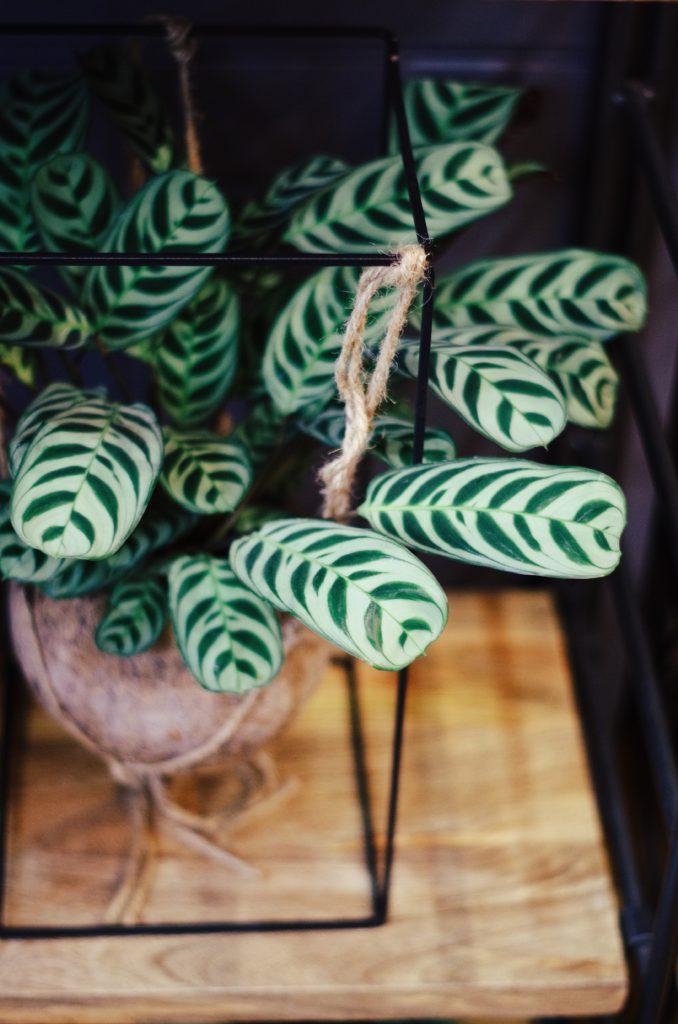 la boutique olfactive bordeaux vente plantes